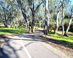 bike-trail-barossa-rda